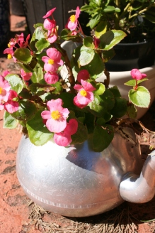 teapot flower